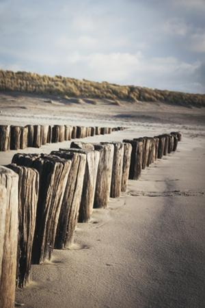 Wooden Groynes on a Sandy Beach, Leading to Sand Dunes, Domburg, Zeeland, the Netherlands, Europe by Mark Doherty