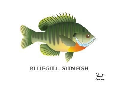 Bluegill Sunfish by Mark Frost