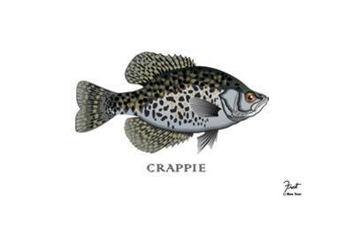 Crappie Fish by Mark Frost