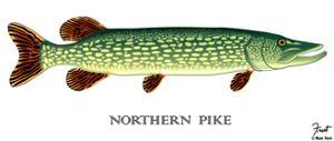 Northern Pike by Mark Frost