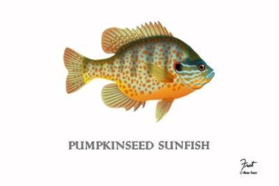 Pumpkinseed Sunfish by Mark Frost