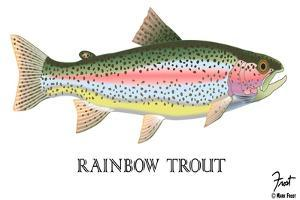 Rainbow Trout by Mark Frost