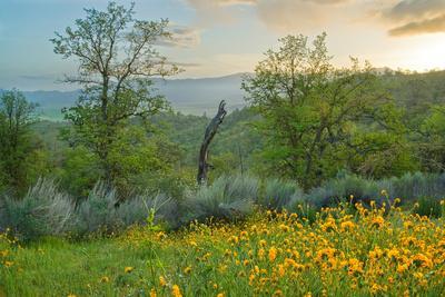 Caliente Spring II