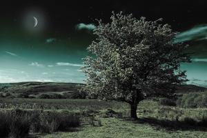 A Tree under a Night Sky by Mark Gemmell