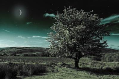 A Tree under a Night Sky by Mark Gemmell