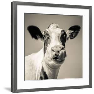Close Upon a Cows Face by Mark Gemmell
