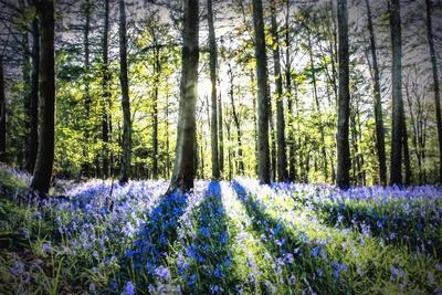English Woodland in Spring