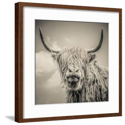 Highland Cattle by Mark Gemmell