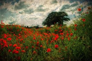 Poppies in a Wild Field by Mark Gemmell