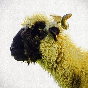 Sheep's Head by Mark Gemmell