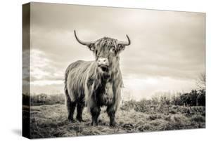 The Highlands by Mark Gemmell