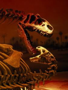 Allosaurus and Camptosaurus, Museum by Mark Gibson
