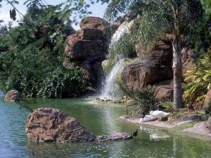 Bird Lagoon, Metrozoo, Miami, FL by Mark Gibson