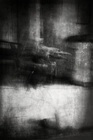 Beauty Is a Witch' Series Elvaston Castle..'Crow'