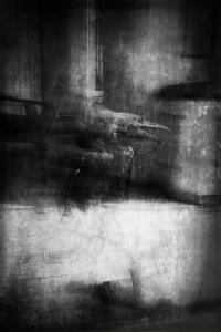 Beauty Is a Witch' Series Elvaston Castle..'Crow' by Mark Gordon