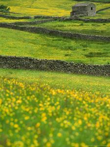Buttercups, Dry Stone Walls & Field Barn by Mark Hamblin