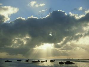 Grey Seal, Halichoerus Grypus Group on Sand Bar, Moody Ligh Ting, UK by Mark Hamblin
