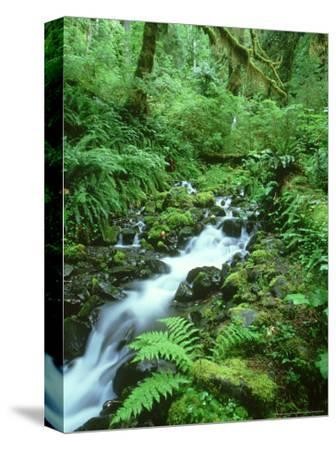 Hoh Rainforest, Olympic National Park Washington, USA