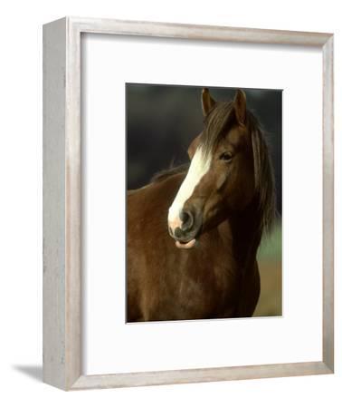 Horse, Chestnut & White Portrait