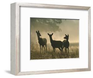 Red Deer Hinds by Mark Hamblin