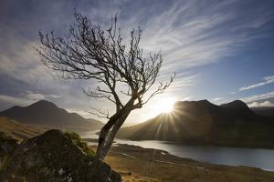 Rowan Tree Silhouetted Above Loch Lurgainn with Cul Mor (Left) and Ben More Coigach Beyond, UK by Mark Hamblin
