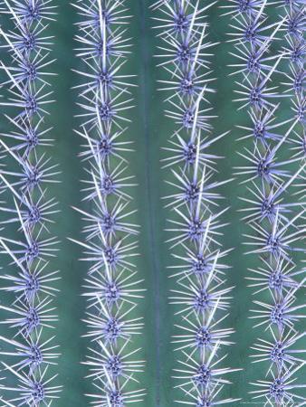 Saguaro Cactus, Close-up Detail, USA
