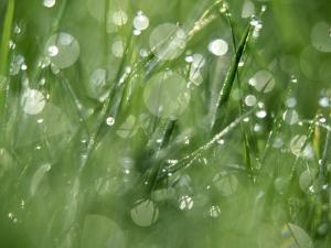 Water Droplets on Grass by Mark Hamblin