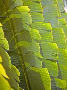 Plants and Vegetation of the Crocker Range Rainforest in Sabah, Borneo by Mark Hannaford