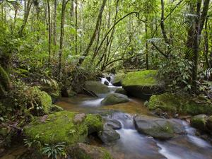 Rainforest and Waterfall in Biopark Near Entrance to Mount Kinabalu National Park, Sabah, Borneo by Mark Hannaford