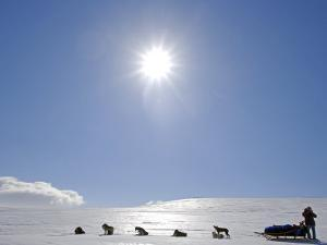 Troms, Lyngen Alps, Travel over the Mountains of the Lyngen Alps Via Dog Sled, Norway by Mark Hannaford
