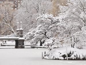 Snow covered trees with a footbridge in a public park, Boston Public Garden, Boston, Massachusetts, by Mark Hunt