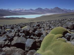 Bolivian Altiplano, Yareta, Andean Cushion Plant, Bolivia by Mark Jones