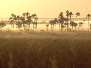 Cerrado Vegetation, Mauritia Vinifera, Emas National Park, Brazil by Mark Jones