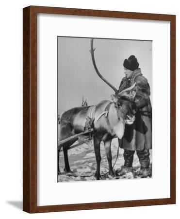 Lapp Tribesman Tending to His Reindeer