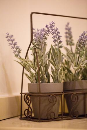 Wire planter holding pots of lavender