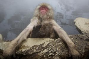 Japanese Macaque (Macaca Fuscata) Relaxing in Hot Spring in Jigokudani by Mark Macewen