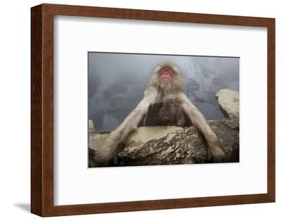 Japanese Macaque (Macaca Fuscata) Relaxing in Hot Spring in Jigokudani