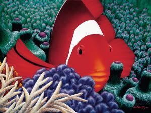 Diva, Tomato Clown Fish by Mark Mackay