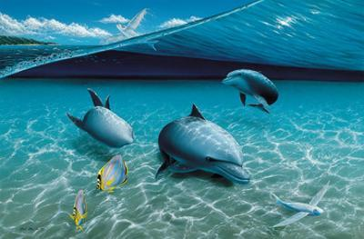 The Chase, Hawaiian Spinner Dolphins