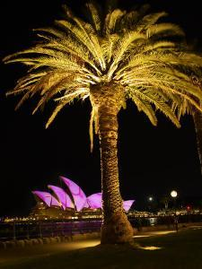 Festival of Light, Sydney Opera House and Palm Tree, Sydney, New South Wales, Australia, Pacific by Mark Mawson
