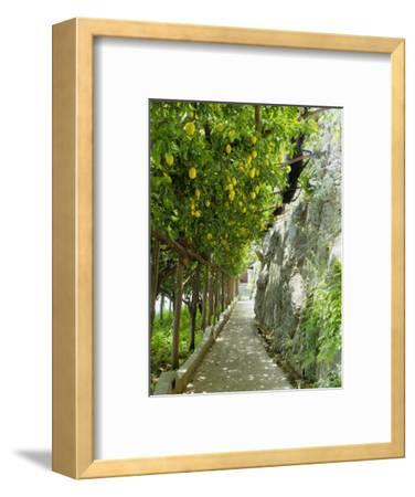 Lemon Groves, Amalfi Coast, Campania, Italy, Europe
