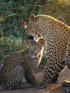 Leopard and Cub, Singita Game Reserve, Sabi Sands, South Africa by Mark Mawson