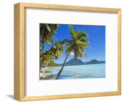 Palm Trees and Beach, Bora Bora, Tahiti, Society Islands, French Polynesia, Pacific