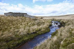 Yorkshire Dales, North Yorkshire, Yorkshire, England, United Kingdom, Europe by Mark Mawson