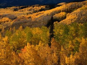 Autumn Colours of the Elk Mountains in Colorado, USA by Mark Newman