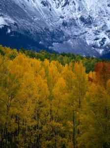 Mt. Sneffel's Range in the San Juan Mountains, San Juan National Forest, USA by Mark Newman