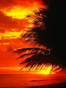 Palm Fronds Silhouetted by Sunset on the Coast, Corcovado National Park, Puntarenas, Costa Rica by Mark Newman