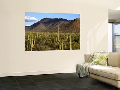 West Unit of Saguaro National Park
