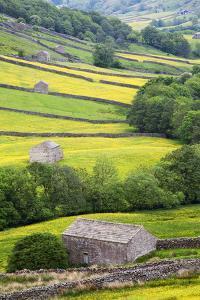 Field Barns in Buttercup Meadows Near Thwaite in Swaledale by Mark Sunderland