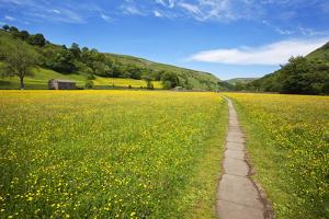 Paved Footpath across Buttercup Meadows at Muker by Mark Sunderland